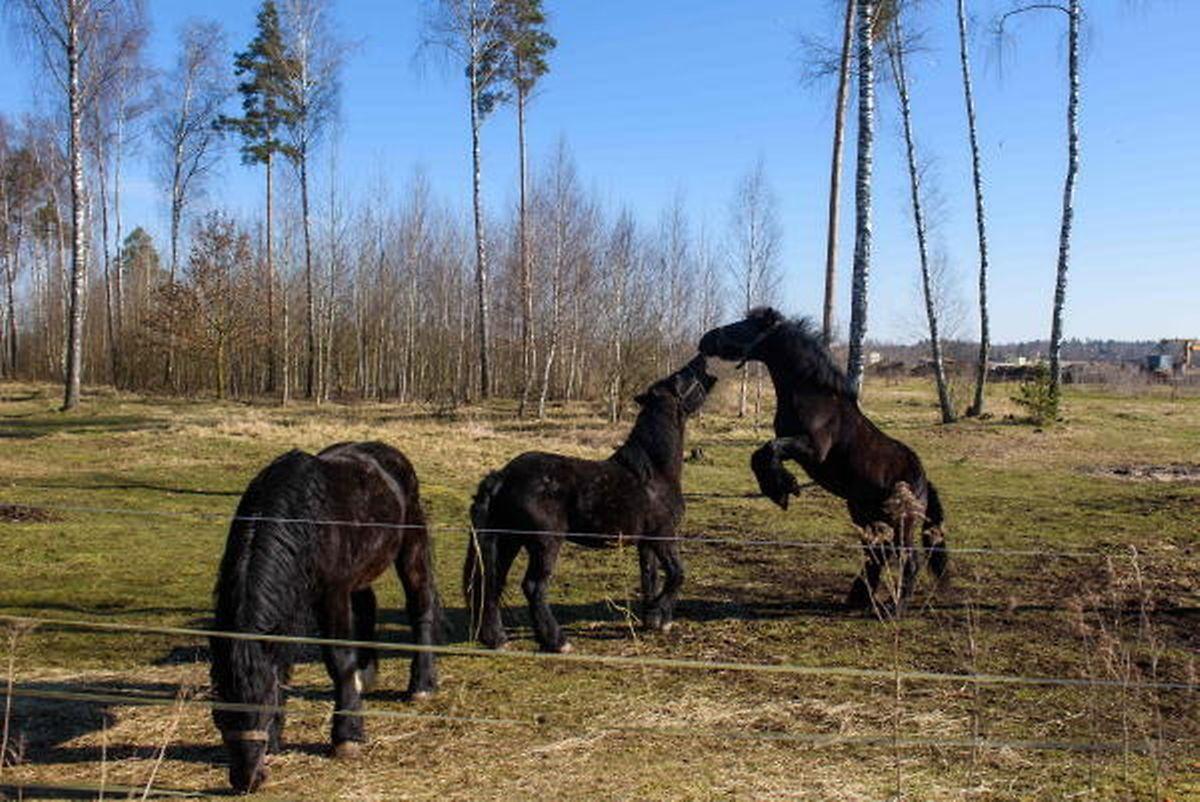 Les chevaux de cirque profitent du confinement.