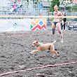 Hund auf dem Beach Terrain / JPEE Montenegro, Beachvolley, Frauen, Luxemburg - Montenegro / Budva / 28.05.2019 / Foto: Christian Kemp