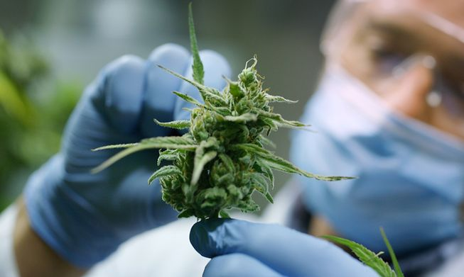 Cannabis was made legal for medicinal purposes in Luxembourg in 2018