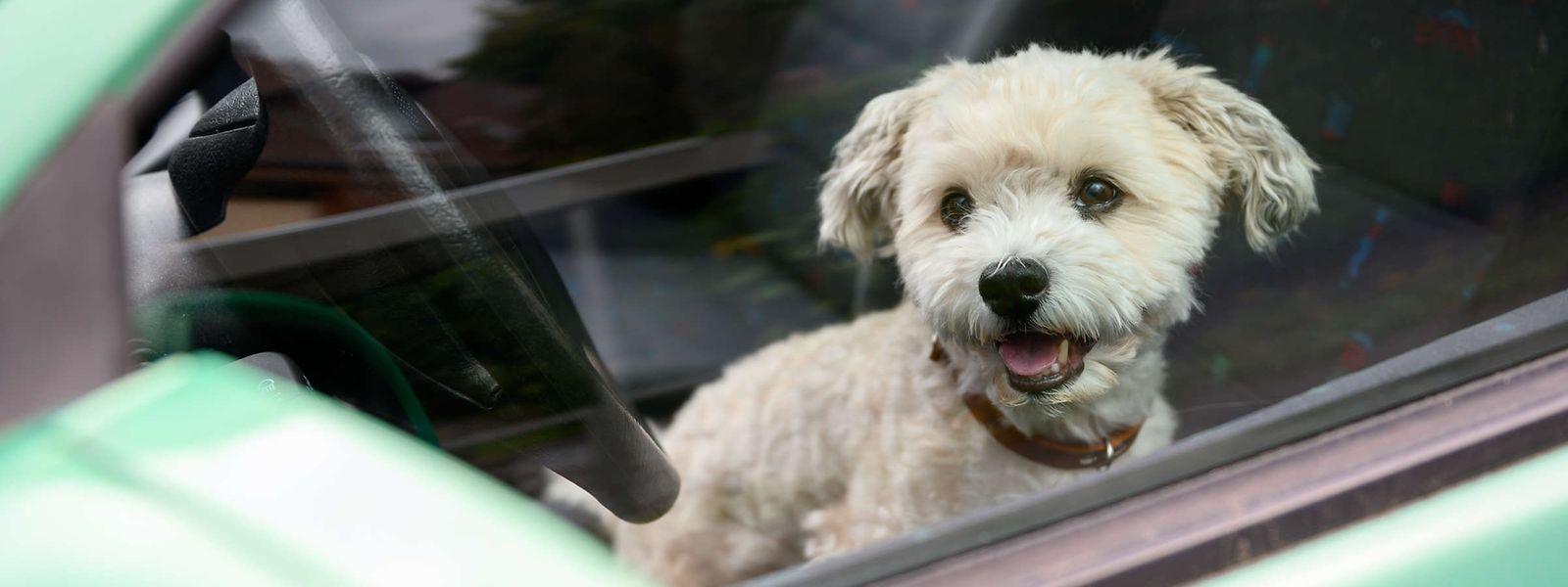 La personne inactive face à un chien délaissé en plein soleil encourt également une peine d'emprisonnement de «huit jours à trois ans».