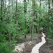 Un chemin à travers les bois de Douaumont, tout près de Verdun.