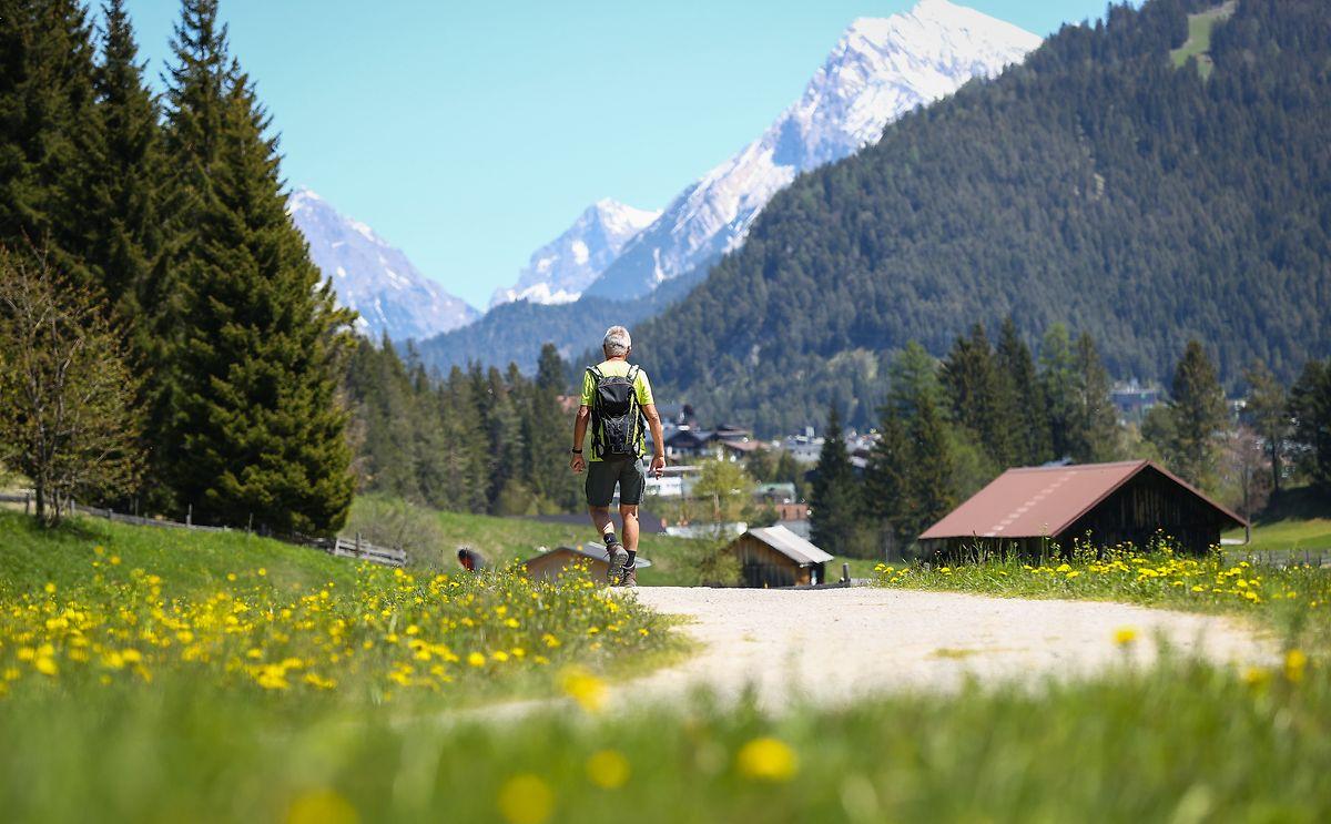 Österreich, Seefeld: Ein Mann wandert auf einem Weg durch eine Wiese zwischen Seefeld und Mösern.