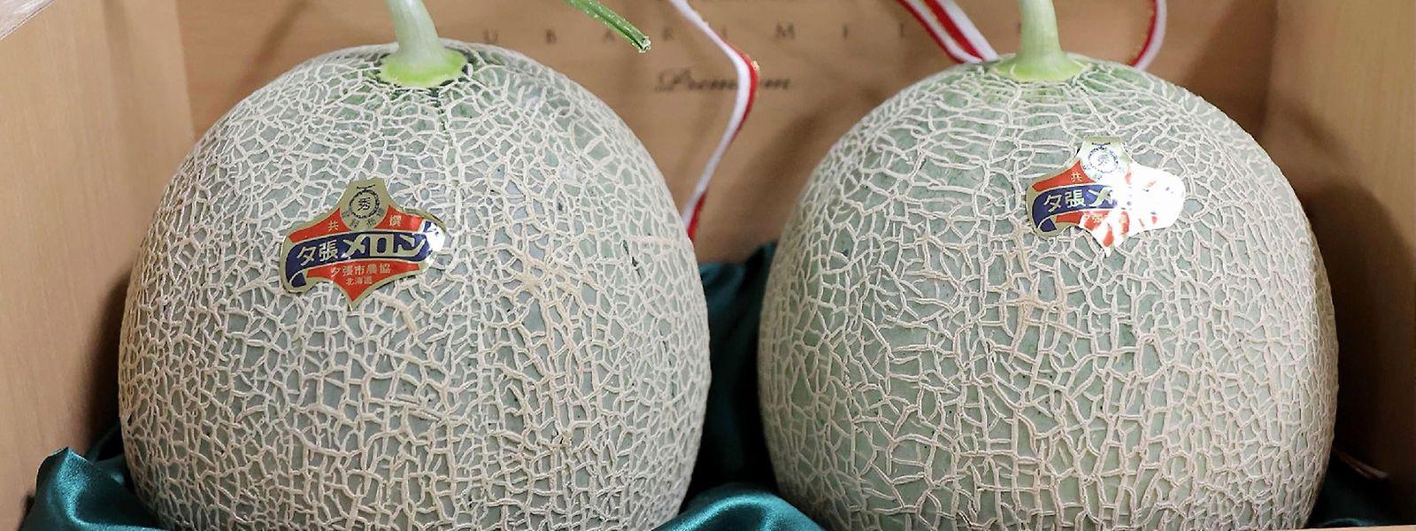 Die Melonen sind eine heißbegehrte Delikatesse.