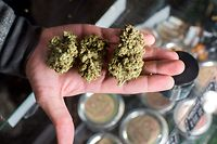 A budtender displays cannabis at the Higher Path medical marijuana dispensary in the San Fernando Valley area of Los Angeles, California, December 27, 2017. - At the stroke of midnight on January 1, pot lovers in California may raise a joint, instead of a glass of champagne. America's wealthiest state is legalizing the growth, sale and consumption of recreational marijuana, opening the door to the world's biggest market. (Photo by Robyn Beck / AFP)        (Photo credit should read ROBYN BECK/AFP via Getty Images)