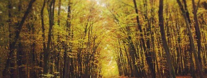 L'allée centrale est la pelouse de dispersion des cendres. Les dépôts de cendres se font dans la terre au pied d'un arbre.