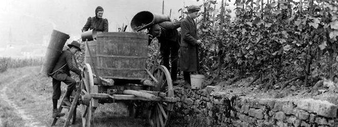 Durch die neuen Absatzmärkte verbesserte sich nach dem luxemburgischen Beitritt zum Zollverein die wirtschaftliche Situation der Winzer.