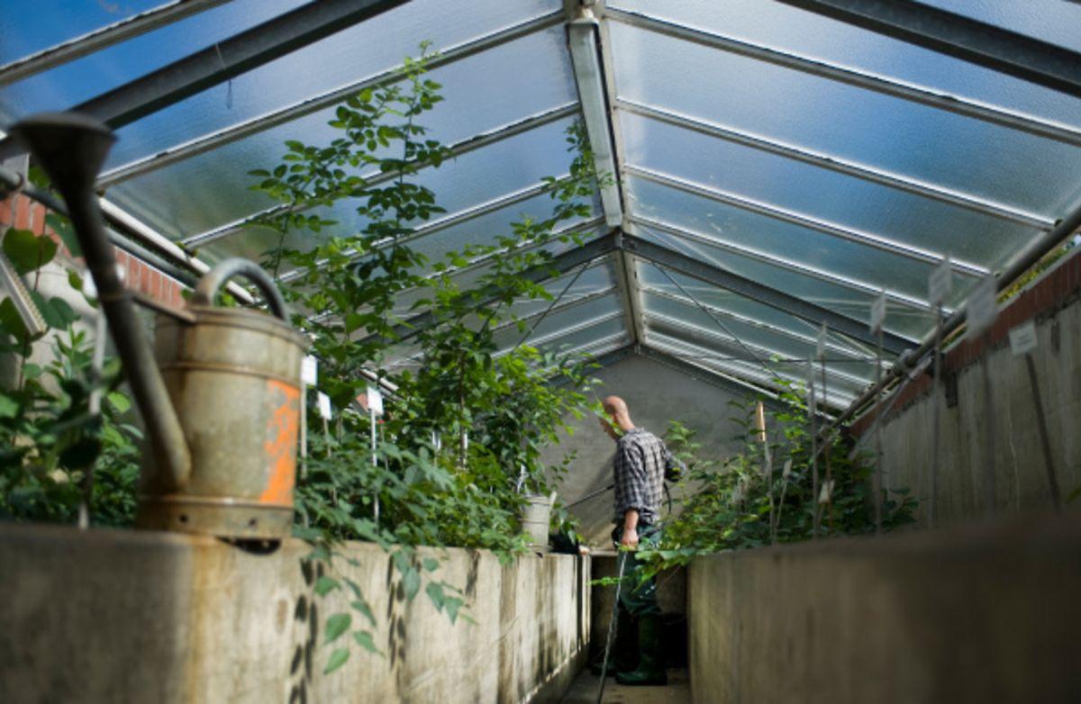 In einem Gewächshaus lagern empfindliche Pflanzen sicher den Winter über.