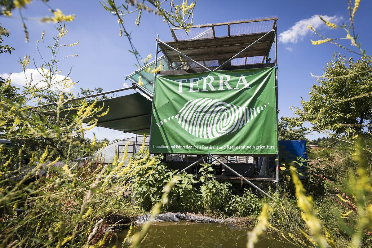 La réunion de ce mercredi 27 juin s'est tenue au beau milieu des plantations de TERRA, une coopérative de maraîchers qui participe au projet de GROW.