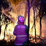 Incêndios na Austrália mataram mais de 2.000 coalas
