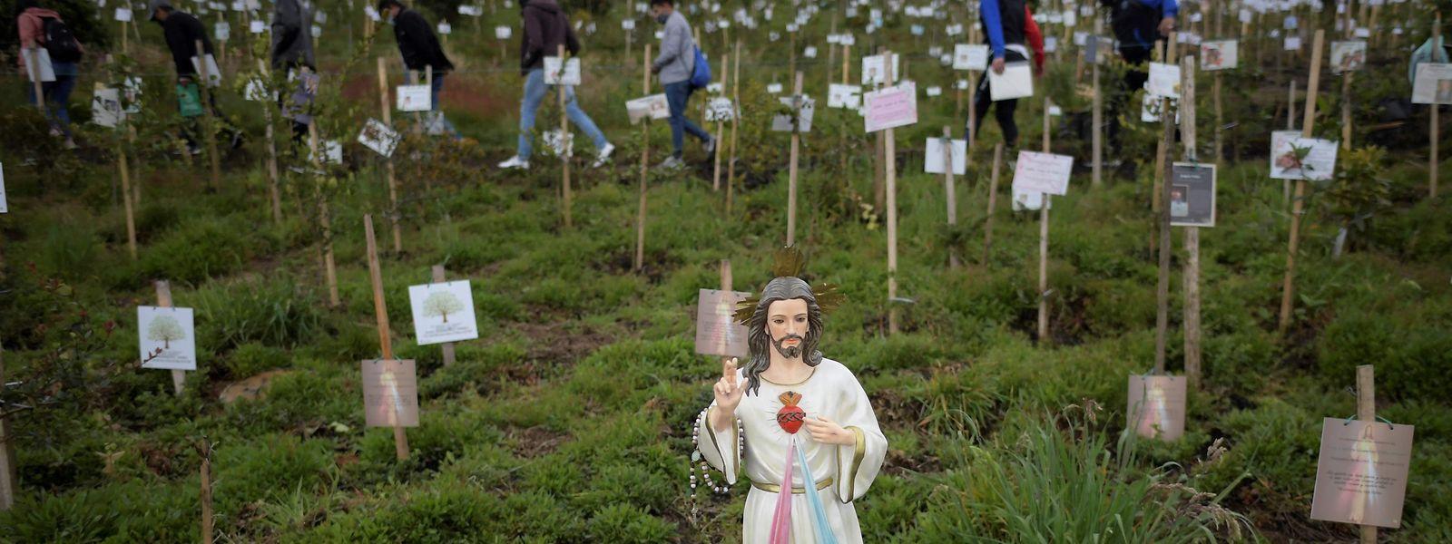 Angehörige von kolumbianischen Covid-19-Opfern verteilen deren Asche in Löchern, in denen sie während einer Hommage an ihre Verstorbenen Bäume pflanzen.