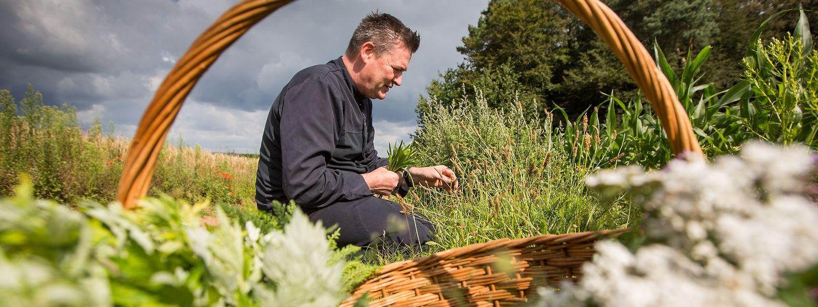 Pour René Mathieu, la nature cache un vrai trésor fait de plantes sauvages saines et goûteuses.