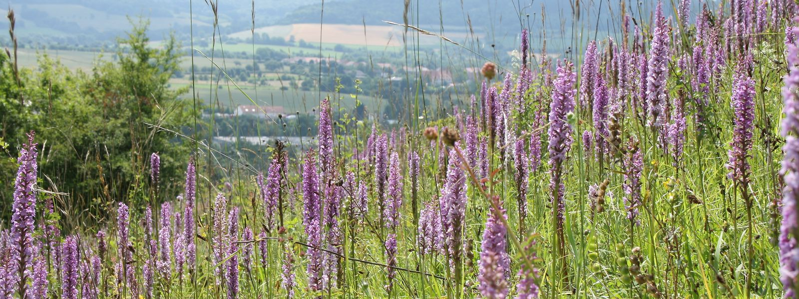 Seit 2009 ist der nahe gelegene Bliesgau im Saarland Unesco-Biosphärenreservat. Ein Vorbild für das Projekt in Luxemburg?