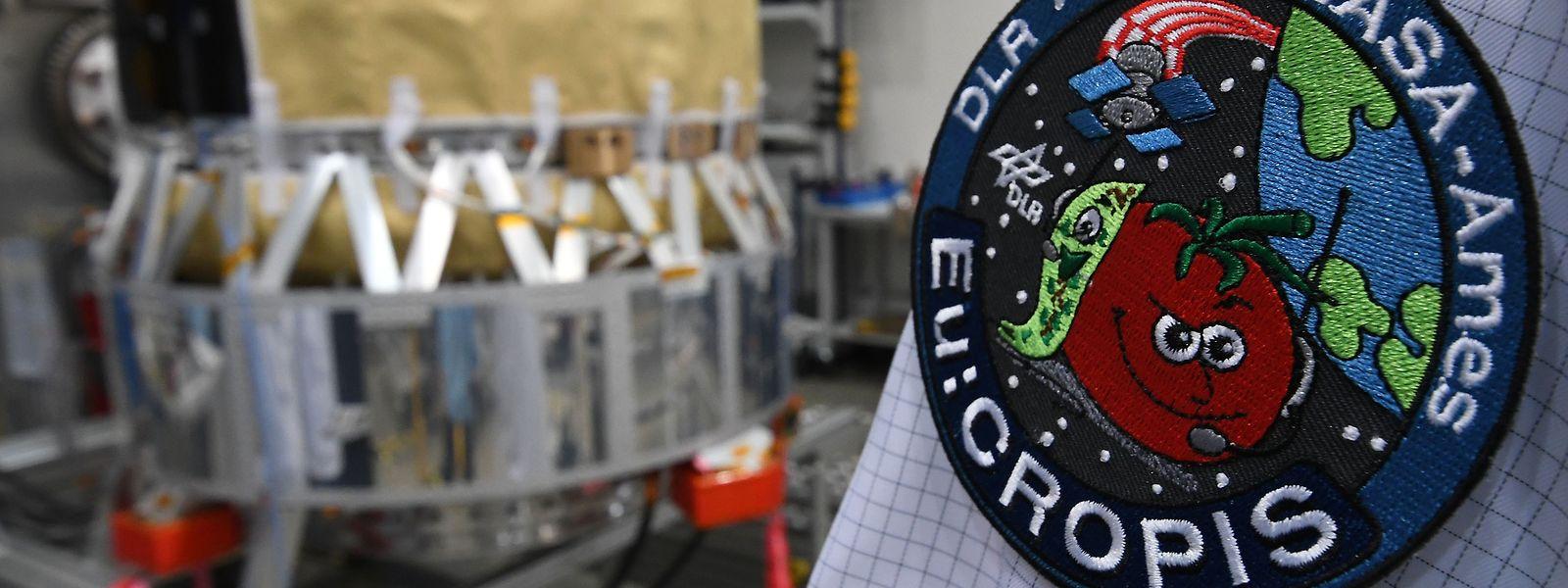 Ein Ingenieur steht im Deutschen Zentrum für Luft-und Raumfahrt (DLR) mit seinem Projektsticker am Arm an einem Forschungssatelliten, der als fliegendes Gewächshaus um die Erde kreisen soll.