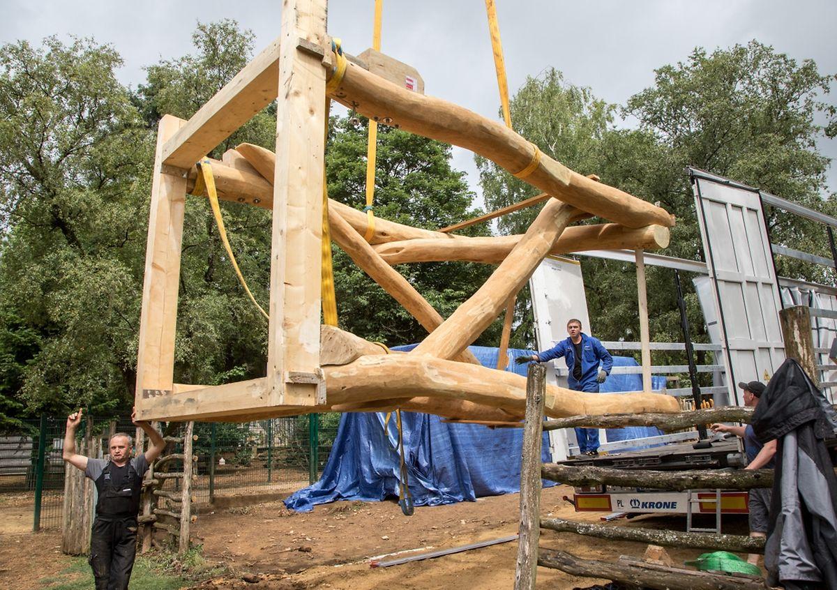 Die Baumhäuser werden auf Holzstelzen errichtet.