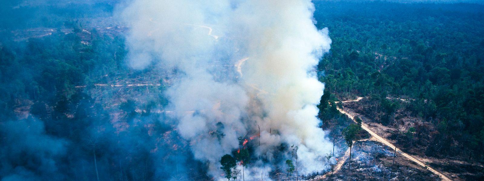 Allein im Juli wurden von INPE-Satelliten mehr als 6.800 Brandherde im Amazonas-Regenwald registriert.