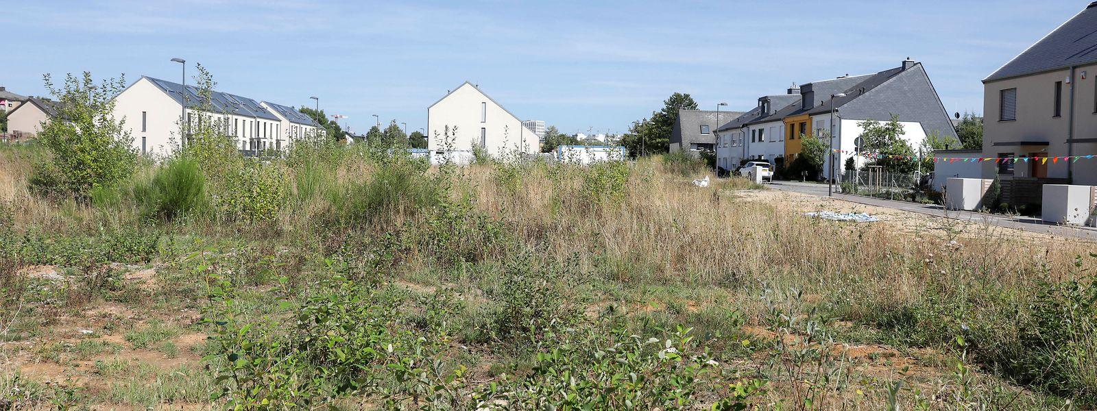 Trop de terrains restent encore vierges de constructions car leurs propriétaires ont trouvé là une rente bien avantageuse, au détriment des capacités de logement du pays.