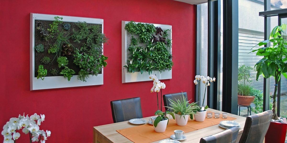 Echte Pflanzen Statt Tapete Ein Dschungel Furs Wohnzimmer