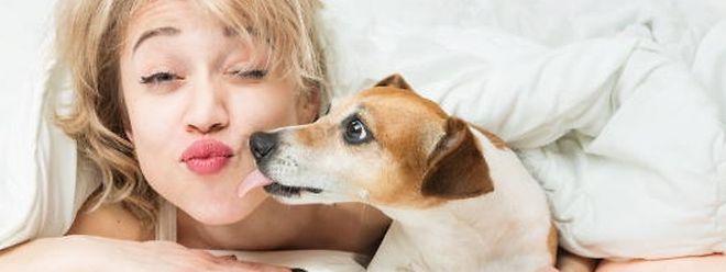 Bussi vom Hund im Bett – sieht süß aus, ist aber riskant.