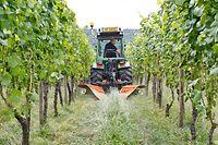 Dieses Bürstengerät wurde auf Wunsch der Privatwinzer speziell auf die Bodenverhältnisse an der Luxemburger Mosel angepasst.