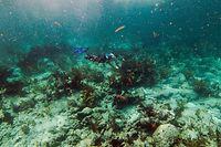 Um turista pratica snorkeling numa rede de corais mortos no Estreito da Florida, nos EUA.
