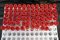 The picture taken on October 26, 2020, in Zagreb, Croatia, shows sample tests for Covid-19 (novel coronavirus) collected at a drive-through testing site. (Photo by DENIS LOVROVIC / AFP)
