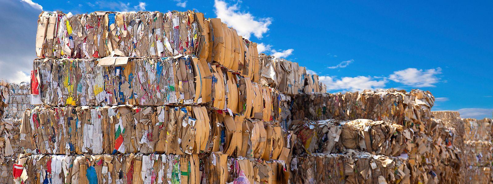 Papierabfälle in einer Recyclinganlage. Mit der Strategie zur Kreislaufwirtschaft soll die luxemburgische Wirtschaft nachhaltiger und klimaneutral umgebaut werden.