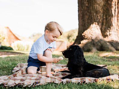 Prinz George beim Picknick mit Familienhund Lupo in Sandringham, Norfolk.