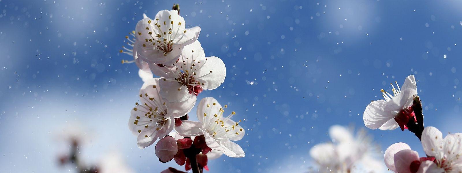 Ab dem Wochenende wird es wieder freundlicher. Der Frühling ist im Anmarsch.