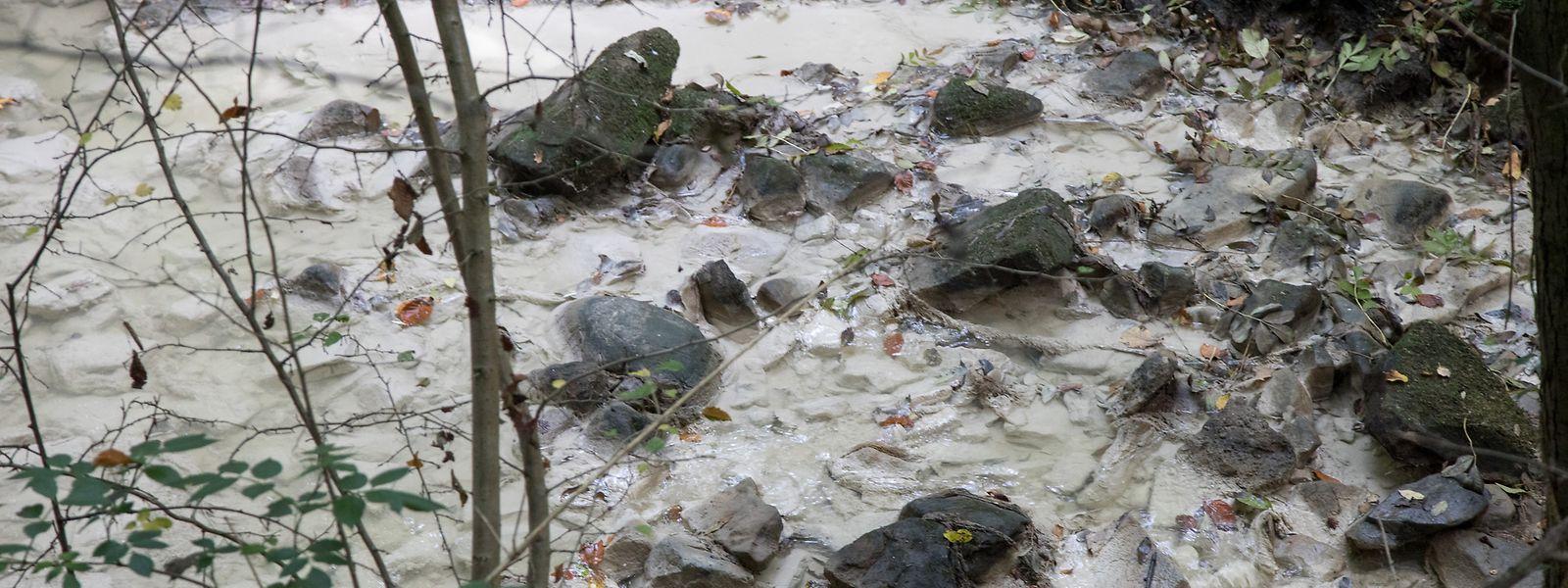101 Fälle von Gewässerverschmutzung wurden 2017 gemeldet.