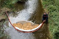 Ein künstlicher Damm und Saugschwämme sollen die Verschmutzung beseitigen.