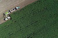 ARCHIV - 09.09.2020, Brandenburg, Petersdorf: Auf einem Feld von einem Landwirtschaftsbetrieb wird Mais für eine Biogasanlage und als Futter für Kühe gehäckselt (Luftaufnahme mit einer Drohne). Die EU-Staaten haben sich auf eine Reform der milliardenschweren Agrarpolitik verständigt. Foto: Patrick Pleul/dpa-Zentralbild/dpa +++ dpa-Bildfunk +++