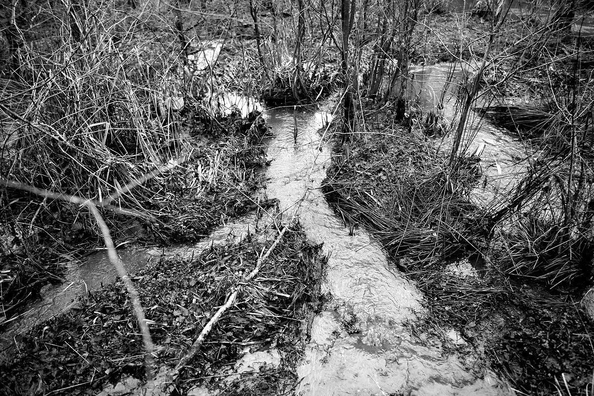 Com os diques, os animais abriram canais por onde a água circula a diferentes velocidades.