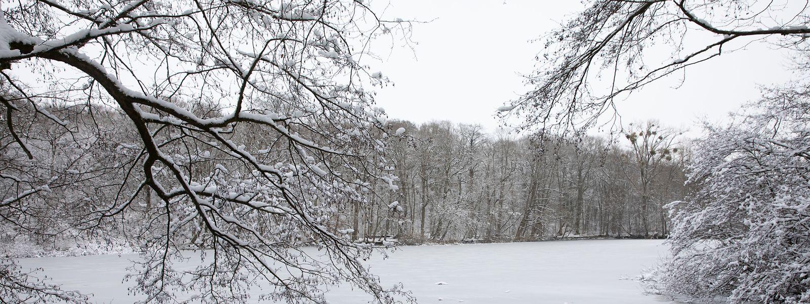 In der Nacht zum Montag können in einigen Landesteilen bis zu sieben Zentimeter Neuschnee fallen.