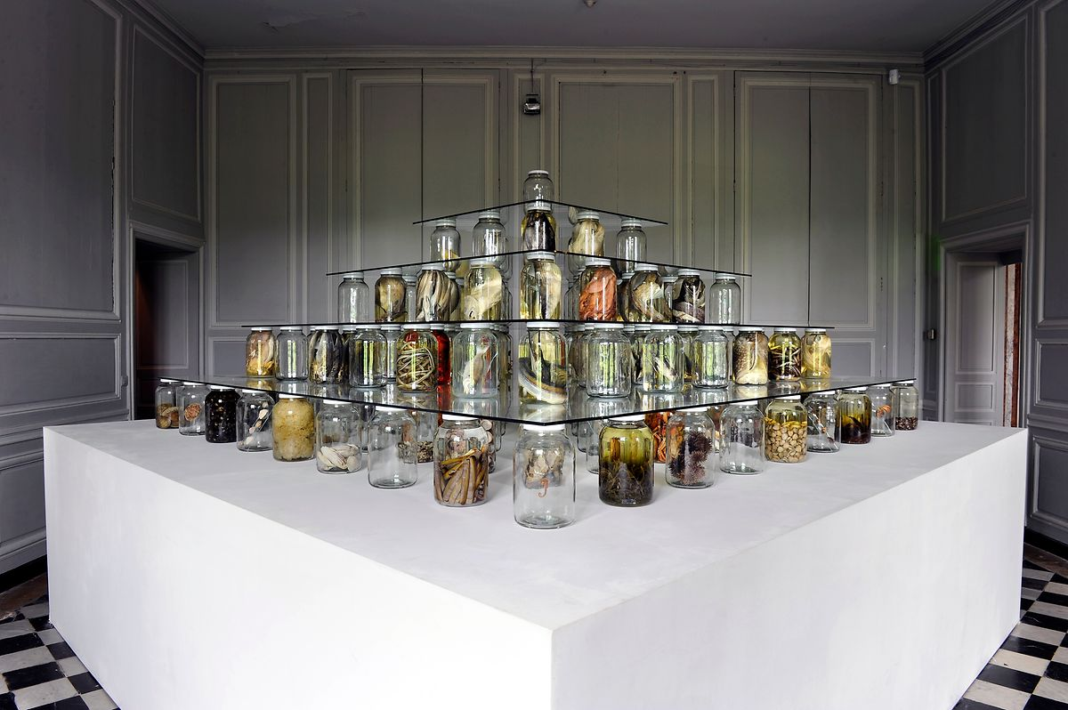 "Brandon Ballangée; ""Collapse"", 2013; In collaboration with Todd Gardner, Jack Rudloe, Brian Schiering and Peter Warny; Mixed-media installation including preserved specimens representing 115 species; Glass, Preffer and Carosafe preservative solutions; 244 x 366 x 366 cm; Nowhere Gallery Milan"