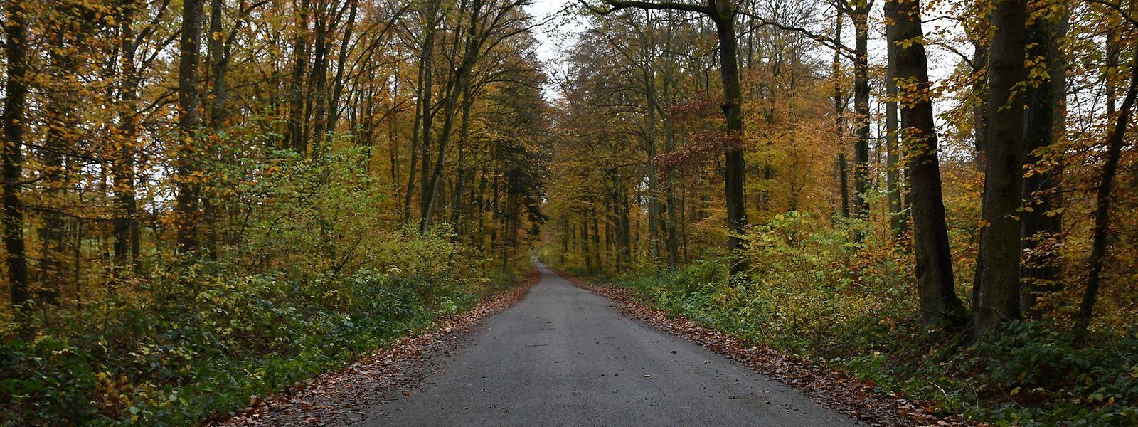 Der Tote wurde am Pessenthalsweg in Leudelingen von einem Förster gefunden.