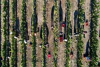 Reife Trauben, trockene Böden: Die Bedingungen wie in diesem Sommer könnten noch extremer werden.