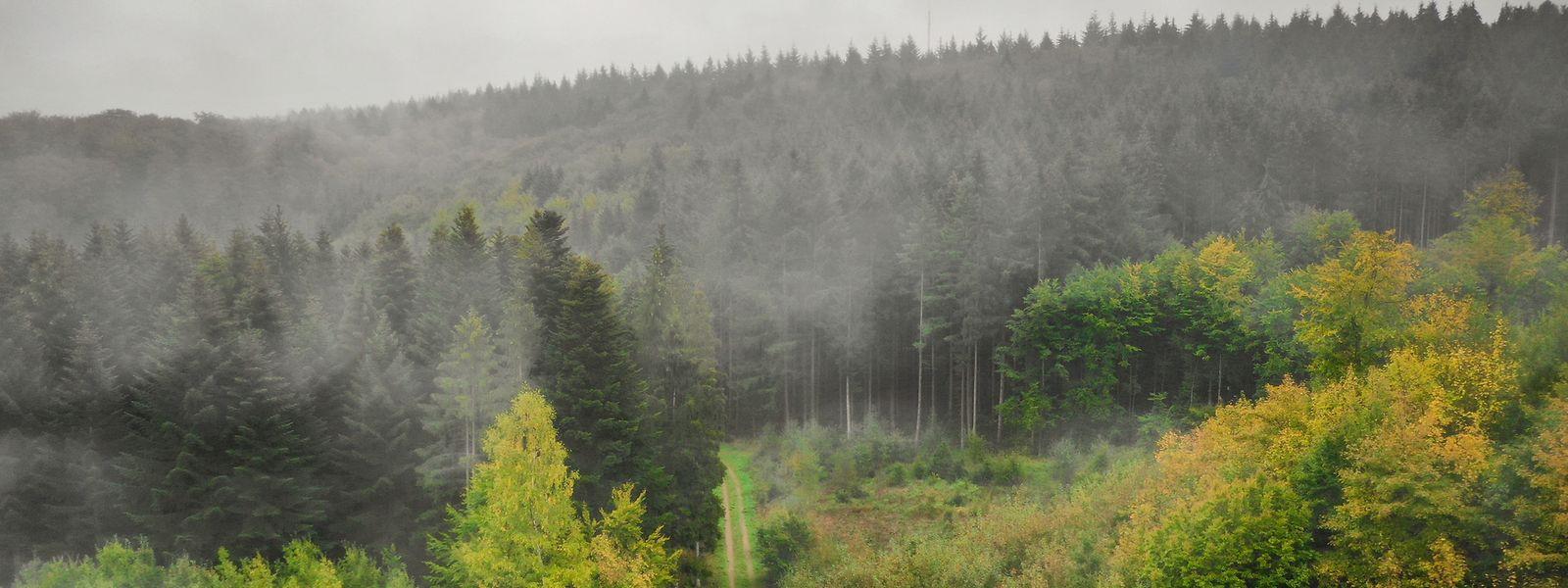 So langsam färben sich die Bäume im Gréngewald. Das Naturgebiet soll nun geschützt werden.