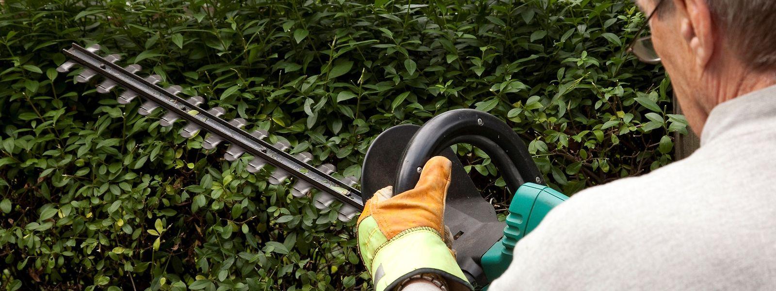 Mit elektrischen Heckenscheren lässt sich das Grün schnell stutzen. Wichtig ist bei großen Flächen eine ausreichende Laufzeit des Akkus.