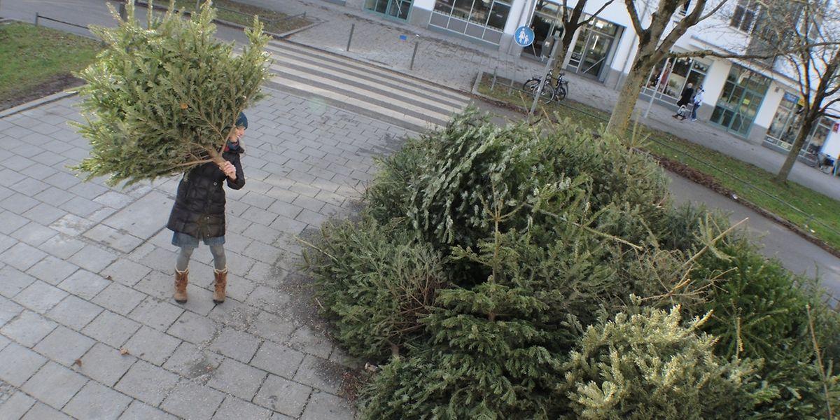 In manchen Ortschaften gibt es Sammeltermine für Weihnachtsbäume.