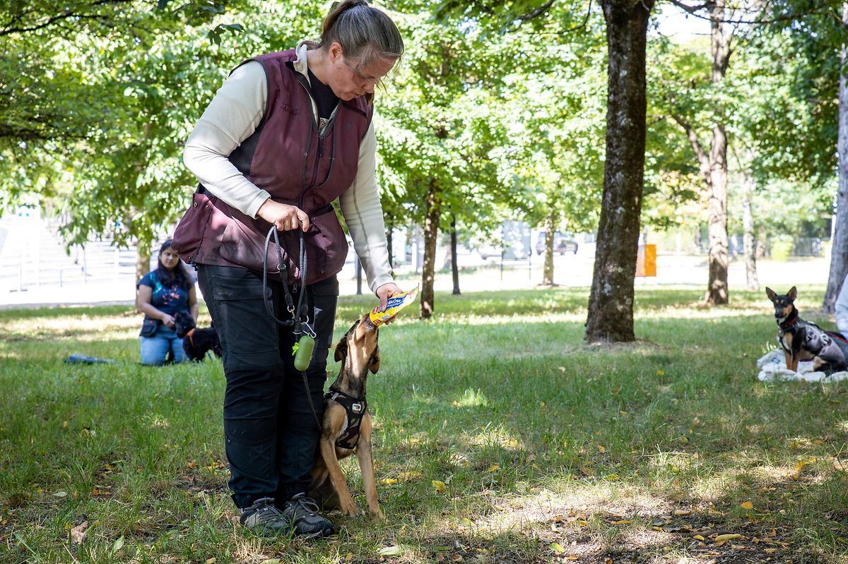 Ingrid Johansson é instrutora de cães e especialista no comportamento destes animais. Explica como alguns gatilhos podem fazer um animal passar a linha vermelha.