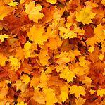 Equinócio de outono. Astrologia, rituais e tradições