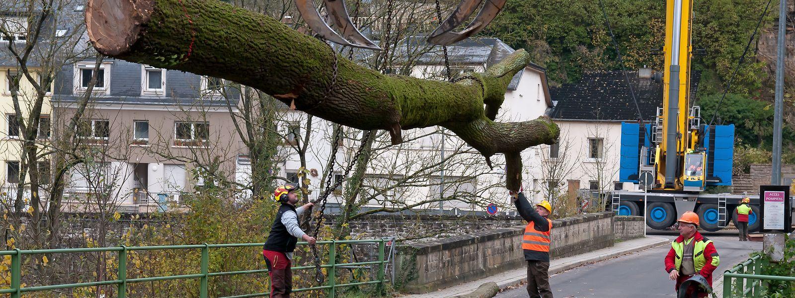 Mit Kränen wurden die risikobehafteten Bäume gesichert und nach dem Fällen evakuiert.