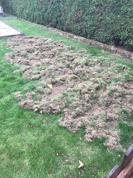 In diesem Zustand hat Max Munhowen aus Monnerich seinen Garten zuletzt öfters vorgefunden.