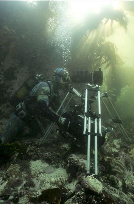 Roger Harrocks nutzt ein Unterwasser-Stativ im Tangwald, um verwackelte Bilder zu vermeiden.