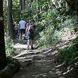 Viele der Wege, vor allem im Westen und Norden, führen durch Waldgebiet.