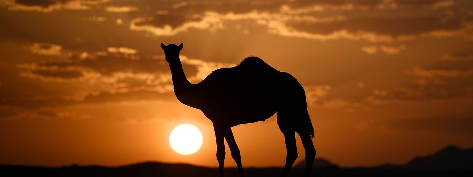 Les organisateurs du rallye Dakar finalisent le parcours de l'édition 2020 dans le désert d'Arabie saoudite