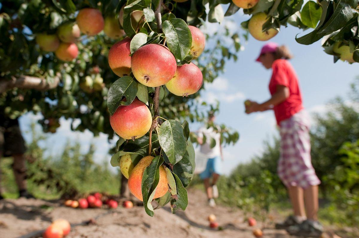 Anhänger der Clean Eating-Philosophie achten darauf, dass Lebensmittel pestizidfrei und vor dem Verzehr möglichst wenig verarbeitet sind.