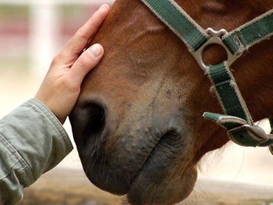 Pferde sind zutrauliche Tiere - eine Eigenschaft, die sie besonders verletzbar macht.