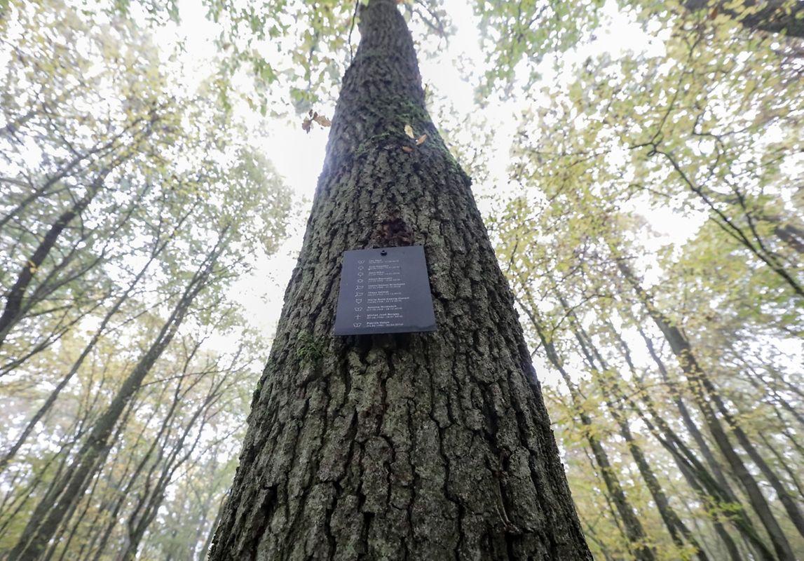 Les concessions s'achètent auprès de l'Etat civil. On ne peut pas choisir son arbre de son vivant. En revanche, les proches du défunt pourront indiquer l'arbre au moment du décès.