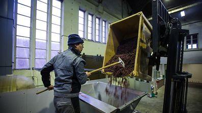 Strohwein wird gepresst - Kellerei Vinsmoselle - Wellenstein